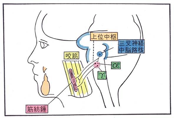 咀嚼系(絵)75